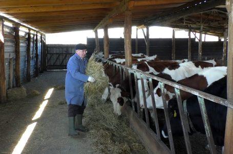 Fermeri Vebi Dervishaj, një shembull i mirë i bujqësisë