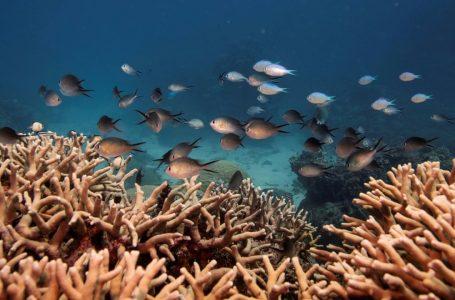 """UNESCO rekomandon që """"Great Barrier Reef"""" të futet në listën e trashëgimisë së rrezikuar"""