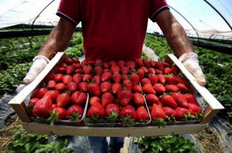 Gati 2 miliardë lekë u eksportuan prodhime nga Shqipëria drejt SHBA-së