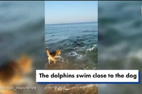 Momente të mrekullueshme, delfini luan me qenin në det (FOTO)