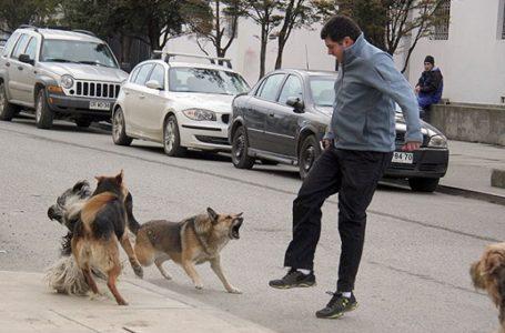 Si të shmangësh kafshimin nga qentë ose si të veprosh nëse të sulmojnë