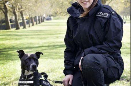 Qeni i braktisur bëhet pjesë e policisë britanike (FOTO)