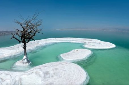 'Pema e jetës' rritet në një ishull me kripë në mes të Detit të Vdekur