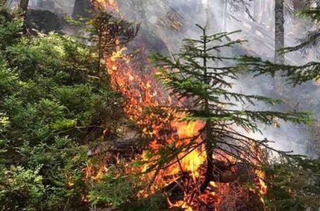 Digjen 50 hektarë të Bjeshkëve të Nemuna, nuk dihet shkaktari