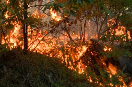 Digjen rreth 50 hektarë pyje në fshatrat Smolicë dhe Dobrosh