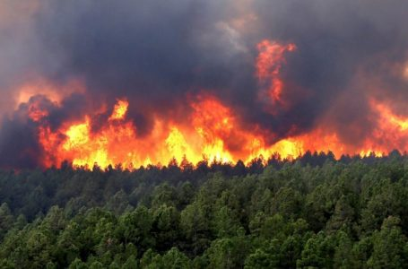 Zjarret po shfarosin pyjet shqiptare