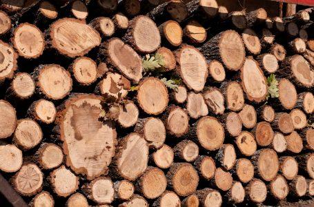 Kriza energjetike ka bërë që qytetarët të përdorin dru për ngrohje